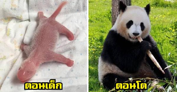 สัตว์โลกตอนเป็นทารก ที่ดูแทบไม่ออกถ้าไม่ได้เห็นตอนโต