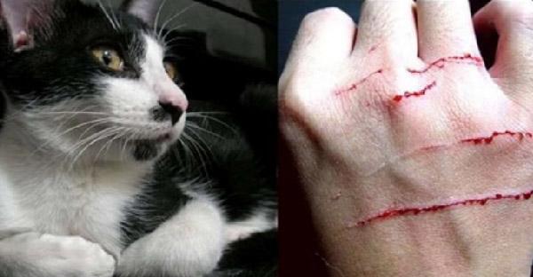 นักวิจัยเผยสีขนของแมว มีผลต่อพฤติกรรมก้าวร้าว