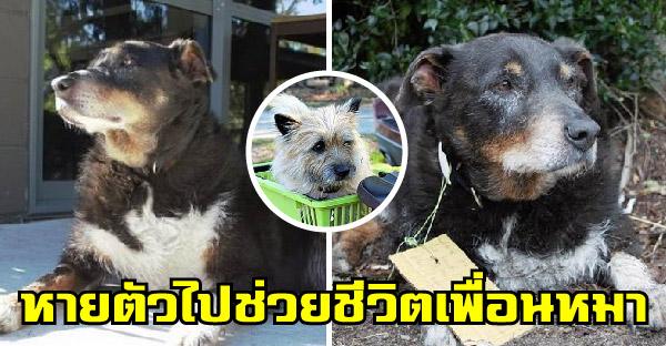 เจ้าของอ่านโน้ตที่ห้อยคอหมาของเขาที่หายตัวไป จึงรู้ว่ามันไปช่วยชีวิตหมาตัวอื่นมา