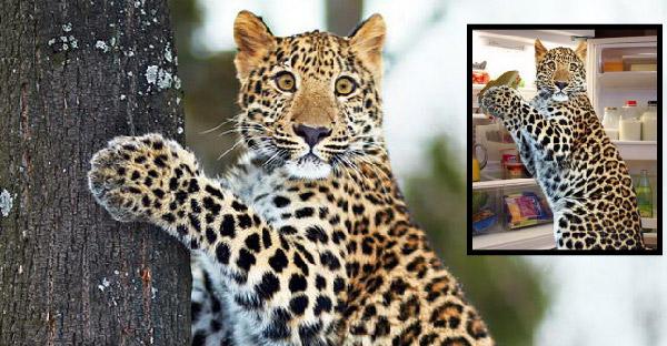 ภาพเสือดาวเผลอสุดฮา ถูกชาวเนตมือดีตัดต่อยำภาพกันฮาสนั่นโลกออนไลน์