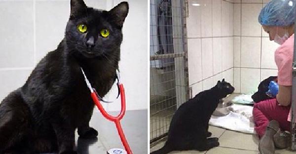เมื่อสัตว์ป่วยต้องหวาดกลัวในคลีนิค ก็ได้หมอแมวดำช่วยรักษาให้หายเป็นปลิดทิ้ง