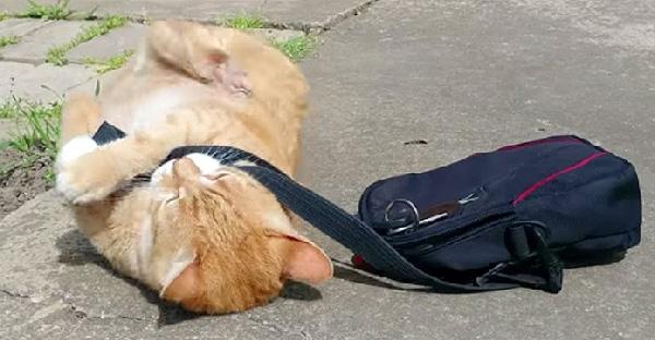 เมื่อสัตว์เลี้ยงตัวป่วนกวนเวลาเก็บกระเป๋า จนกลายเป็นภาพฮาๆขึ้น