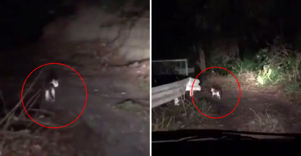 แมวปริศนาโผล่กลางภูเขา เดินนำรถที่กำลังหลงทางออกสู่ถนนใหญ่ได้สำเร็จ
