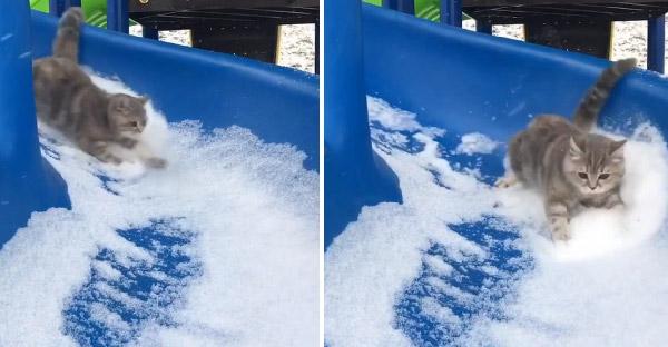แมวเหมียวเล่นสไลเดอร์หิมะ เข้าโค้งแบบเนียนๆ จนโด่งดังบนโลกออนไลน์