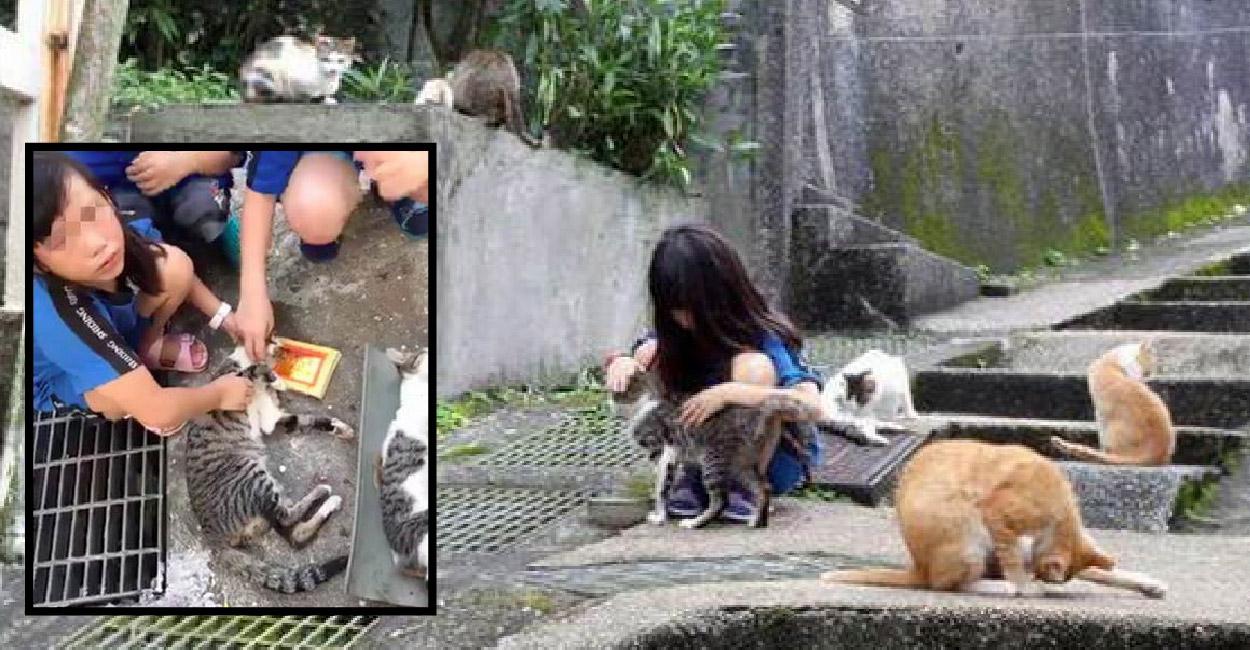เด็กน้อยดูแลแมวจรราวลูกตัวเอง ก่อนที่จะถูกวางยาเบื่อจนเธอร้องไห้ฟูมฟายแทบเสียสติ