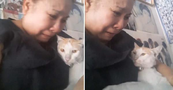 คุณป้าร้องไห้ดีใจสุดขีด เมื่อเจอลูกแมวที่หายไป หวนกลับคืนสู่อ้อมอกอีกครั้ง