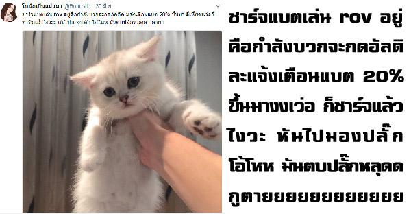 """มัดรวมทวิตเตอร์สุดฮาของ """"โบนัสเป็นแม่แมว"""" ที่ทำให้ขำจนหยุดไม่ได้"""