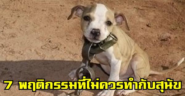 7 พฤติกรรมต้องห้ามที่ไม่ควรทำกับสุนัข และหลายคนอาจเคยทำมาแล้ว