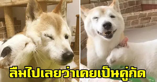 เมื่อหมาแก่เป็นอัลไซเมอร์ ดันลืมว่าเจ้าเหมียวคือคู่กัด จึงกลายเป็นเพื่อนซี้หน้าตาเฉย
