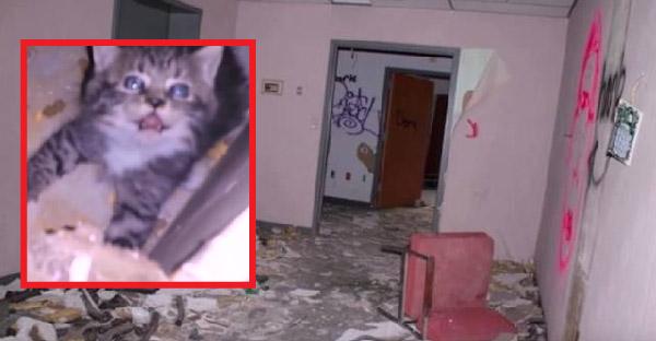 ชายหนุ่มเข้าไปถ่ายภาพในโรงพยาบาลร้าง แต่ดันเจอลูกแมวปริศนาถูกทิ้งอยู่ลำพัง