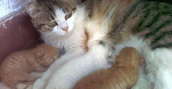 สาวหวังดีซ่อนลูกแมวที่เสียชีวิตจากแม่แมว จนทำให้มันโกรธไม่ยอมให้อภัยเธอ