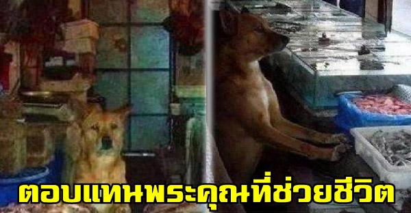 หมาจรจัดตอบแทนคุณป้าที่ช่วยชีวิต ด้วยการเฝ้าร้านแถมเรียกลูกค้าให้เพียบ