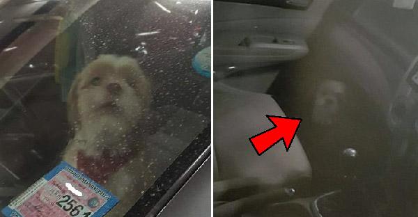 หมาน้อยถูกขังไว้ในรถรอนานกว่า 2 ชม. พอเจอเจ้าของกลับเจอคำตอบสุดอึ้ง จนชาวเนตรับไม่ได้