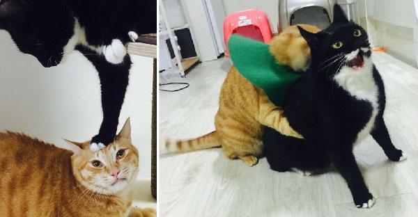 เจ้าแมวดำแกล้งจิ้มหัวแมวส้มเล่นๆ จึงเจอแก้แค้นแบบชุดใหญ่ไฟกระพริบ