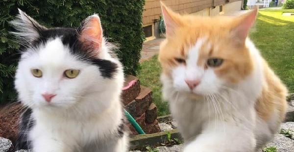 แมวหนุ่มแอบเหล่สาวในฝันกว่า 2 ปี กว่าจะกล้าเข้ามาเล่นด้วยกัน