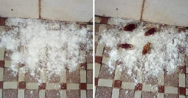 เผยเคล็ดลับกำจัดแมลงสาบเห็นผลในคืนเดียว เพียงแค่ใช้ส่วนผสมบ้านๆเหล่านี้!!