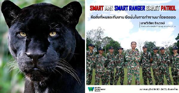 รู้จักเสือดำสัตว์อนุรักษ์ให้มากขึ้น และโพสต์ล่าสุดของนายวิเชียร ชิณวงษ์ ผู้พิทักษ์ผืนป่าแผ่นดินไทย