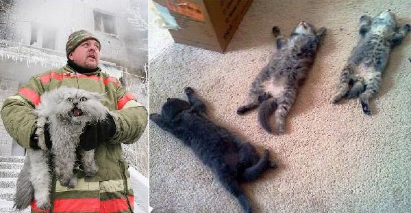 20 ภาพแมวเหมียวที่เป็นกระแสในโลกออนไลน์ คัดมาแล้วให้เฮฮากันสุดๆ