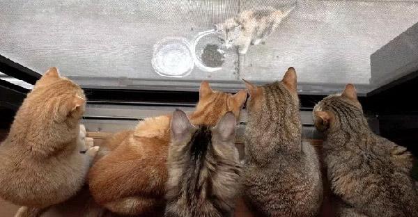 ลูกแมวจรจัดหลงทางเข้าบ้าน และแมวเหมียวเจ้าถิ่นนับสิบ ก็นั่งรอต้อนรับทุกวัน