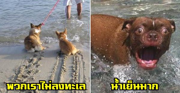 14 ภาพน้องหมากลัวน้ำมาก จนทำหน้าทำตาได้เหวอสุดๆ