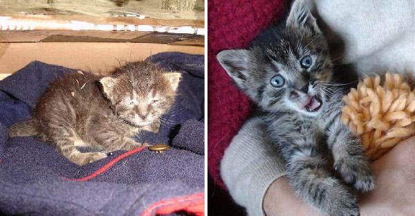 ลูกแมวตัวน้อยหลงทางในพายุหิมะ ก่อนสาวช่วยเหลือและชุบเลี้ยงจนเติบโตน่ารักสุดๆ