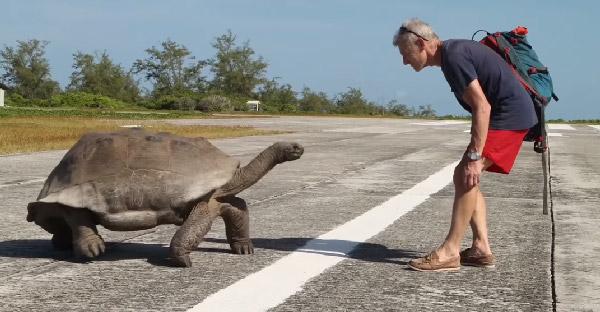 """ลุงพิธีกรบังเอิญไปขัดจังหวะการ """"ฟีทเจอริ่ง"""" ของเต่า ทำให้มันโกรธจัดเดินตามไม่หยุด"""