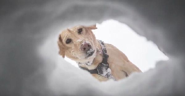 """เมื่อคนถูกหิมะถล่มและไม่มีใครคาดคิดว่า """"สุนัขกู้ภัย"""" จะมาช่วยพวกเขาได้"""