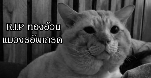 ท้องอ้วน แมวจรอัพเกรด เสียชีวิตกะทันหัน ชาวเน็ตแห่ไว้อาลัยสุดเศร้า