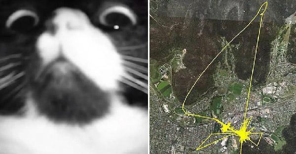 นักวิจัยติด GPS ไว้ที่ปลอกคอแมว และพบว่าแต่ละตัวมีเส้นทางและจุดหมายแตกต่างกันชัดเจน