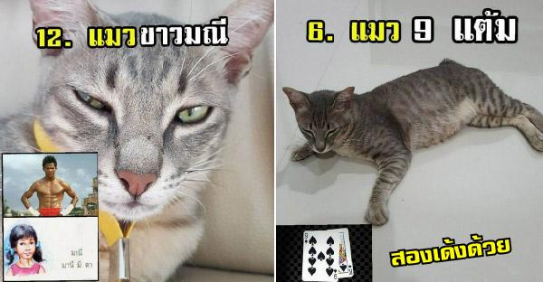 ถ้าสายพันธุ์ของแมวไทยกลายเป็นมุขห้าบาทสิบบาท จะเฮฮาขนาดไหนกัน