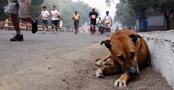 เมื่อติดกล้องโกโปรไว้กับหมาจรจัด 1 วัน แสดงให้เห็นว่ามันต้องเจอเรื่องโหดร้ายอะไรบ้าง