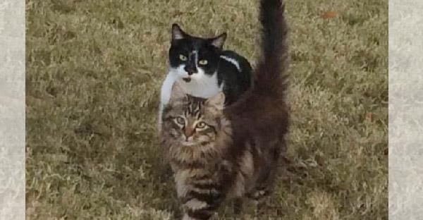 แม่แมวจรจัดพาลูกมาฝากมนุษย์และหายตัวไปเกือบปี ก่อนกลับมาหาอีกครั้งและท้องโตมาอีกรอบ