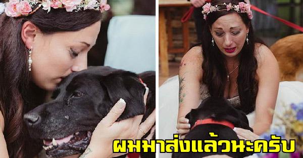 สุนัขป่วยระยะสุดท้ายรอส่งเจ้าของแต่งงาน ก่อนสิ้นลมอย่างสงบในเวลาต่อมา