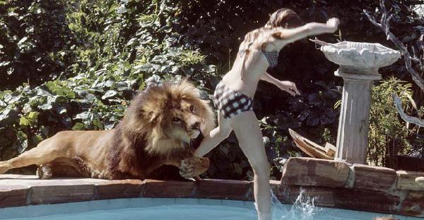 ดาราฮอลลีวูดเอาสิงโตมาเลี้ยงที่บ้าน จนเกิดเรื่องราวมากมายและสายเกินไปที่จะเสียใจ