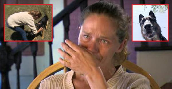 สาวเล่าเหตุการณ์ ที่สุนัขจรจัดช่วยชีวิตด้วยน้ำตา หลังขับรถตกคูน้ำจนเกือบไม่รอด