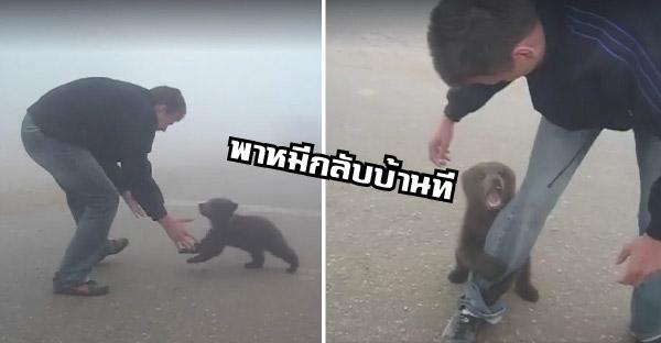 ลูกหมีตัวน้อยวิ่งตามเล่นกับชายหนุ่ม แถมเกาะแข้งเกาะขาให้พากลับบ้านด้วย