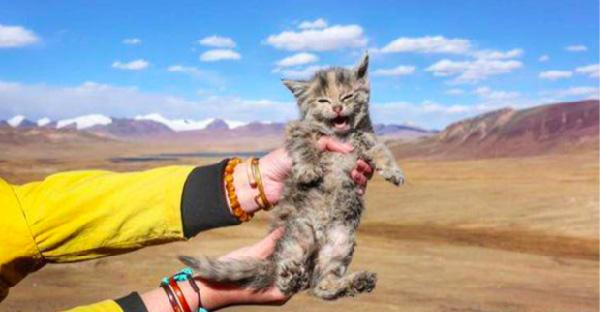 หนุ่มไปเที่ยวทิเบตพบลูกแมวปริศนา ที่ความสูงเหนือระดับน้ำทะเลกว่า 5,000 เมตร