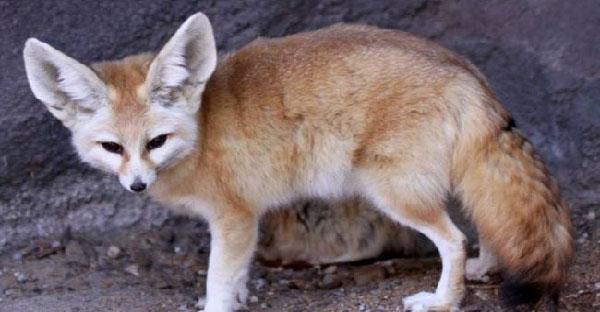 10 สัตว์โลกที่สามารถวิวัฒนาการตัวเอง เพื่อความอยู่รอดในทะเลทรายซาฮาร่า!!