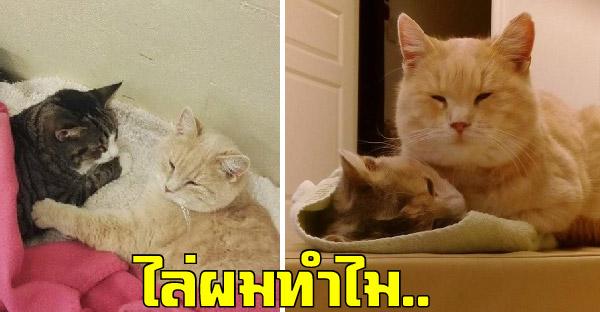 แศาลสั่งไล่แมวส้มประจำคลีนิคที่ช่วยดูแลสัตว์ หลังเจอร้องเรียนอย่างไม่เป็นธรรม