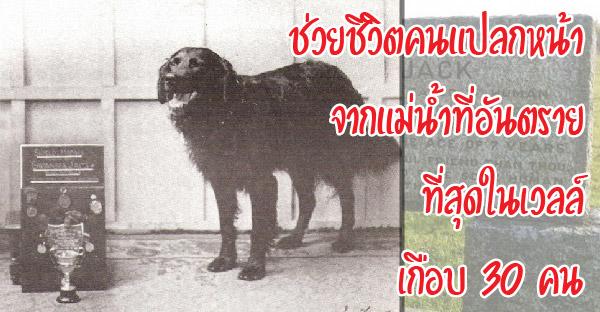 8 ยอดสุนัขที่สร้างสุดยอดผลงาน จนต้องถูกจารึกไว้ในประวัติศาสตร์โลก