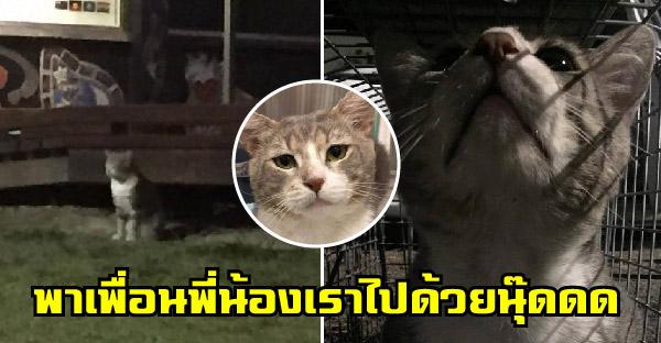 แมวจรจัดยอมเดินเข้าสู่กับดัก เพื่อพาเพื่อนๆและครอบครัวไปอยู่ด้วยกัน