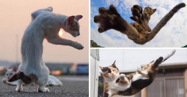 ช่างภาพถ่ายทอดชีวิตแมวจรจัดที่เหมือนกำลังฝึกวิทยายุทธยังไงยังงั้น