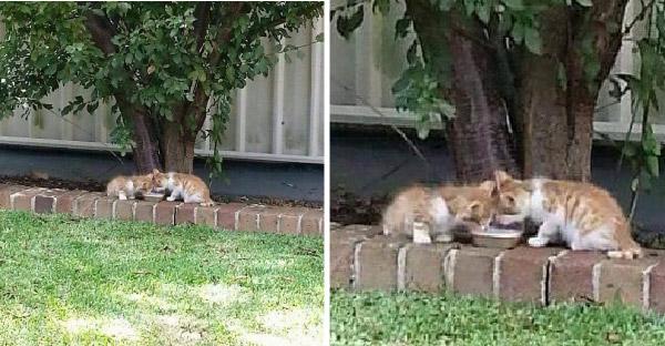 สาวพบลูกแมวสองตัวถูกแม่ทอดทิ้งไว้ลำพัง และทั้งคู่ตาบอดจึงกอดกันไม่ยอมห่าง