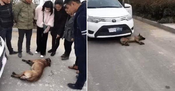 หมาจรจัดไม่ยอมลุกไปไหน นอนขวางรถยนต์ จนชาวบ้านนึกว่าถูกชน
