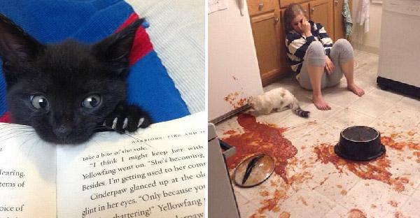 10 เหตุการณ์ไม่คาดฝันที่คุณไม่อาจหลีกเลี่ยงได้ หากคิดจะเลี้ยงแมวซักตัว