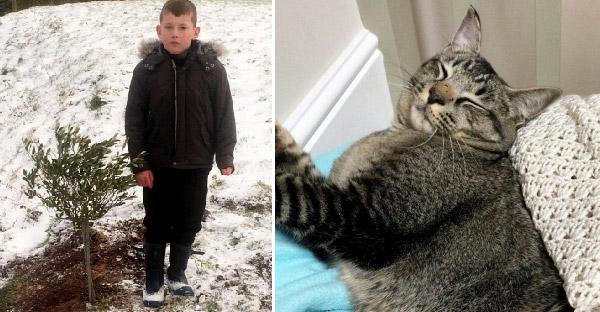เจ้าของนึกว่าพบร่างแมวของเขาที่หายไปในพายุหิมะ ก่อนวันต่อมามันจะกลับมากินข้าวหน้าตาเฉย