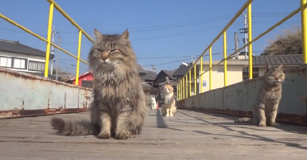 แก๊งแมวเหมียวแห่งเกาะอาโอชิมะ กับความน่ารักที่ทาสแมวไม่ควรพลาด (ᗒwᗕ)