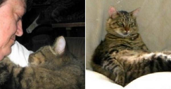 แมวหนีออกจากศูนย์พักพิงสัตว์ เพื่อไปหาคู่รักที่เคยช่วยชีวิตมันไว้