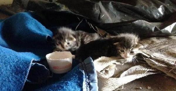 พลเมืองดีช่วยลูกแมวกำพร้าหลงทาง จนเปลี่ยนเป็นแมวสวยรวยเสน่ห์ไปในพริบตา