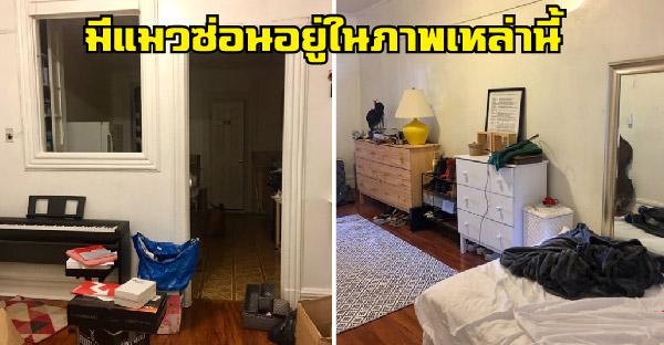 ทาสสาวทวิตรูปภาพตามหาแมวที่หายไป งานนี้ชาวเน็ตช่วยกันจับผิดภาพให้วุ่น!!